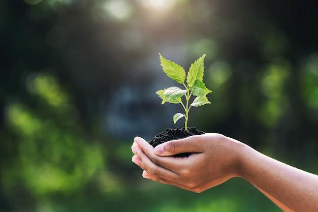 Ręka trzyma młodą roślinę ze światłem słonecznym na zielonej przyrodzie