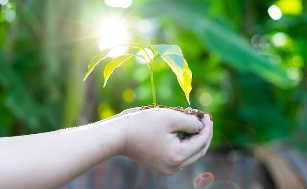 Ręka trzyma młode drzewo do sadzenia. koncepcja uratuj świat