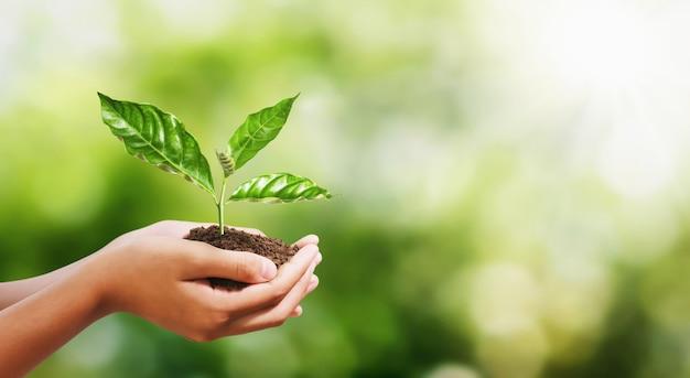 Ręka trzyma młodej rośliny na plamy zieleni natury tle. eko dzień ziemi