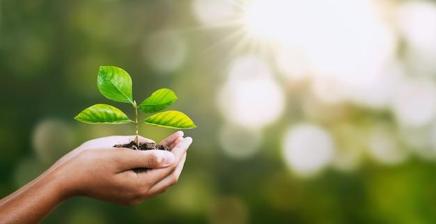 Ręka trzyma młodej rośliny na plamy zieleni naturze.