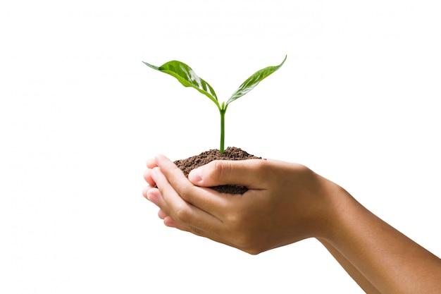 Ręka trzyma młodych roślin na białym tle