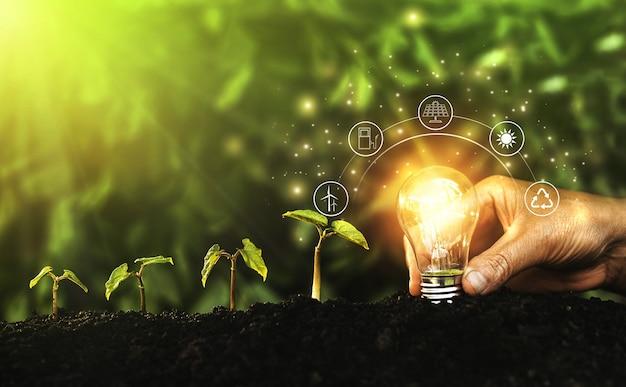 Ręka trzyma oświetloną żarówkę na tle natury. pojęcie ekologii. źródła energii dla odnawialnego, zrównoważonego rozwoju.