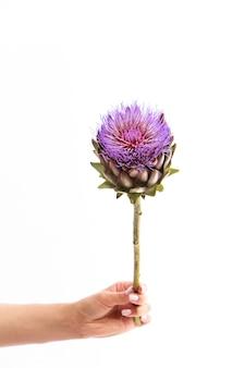 Ręka trzyma pojedynczy kwiat karczocha