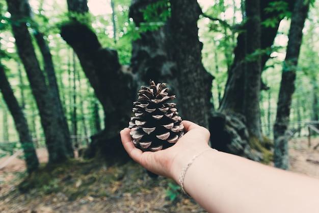 Ręka trzyma suszonego ananasa i stuletnie drzewo w tle