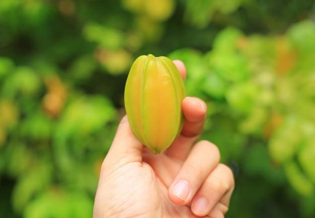 Ręka trzyma świeże gwiazdowe jabłczane owoc w naturze.