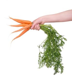 Ręka trzyma wiązkę marchewki na bielu