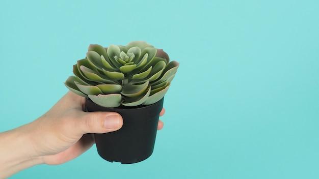 Ręka trzyma zielone sztuczne kaktusy lub plastikowe lub fałszywe drzewo na miętowym zielonym tle.