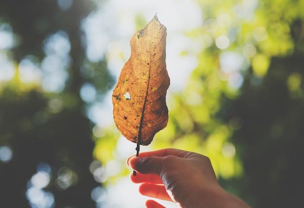 Ręka trzymać liść piękną naturę