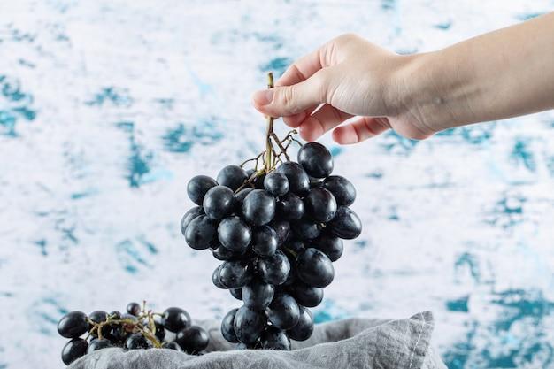 Ręka trzymająca kiść ciemnych świeżych winogron na kolorowym