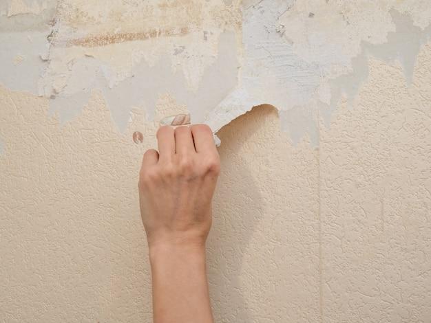 Ręka usuwa starą tapetę ze ściany. pojęcie naprawy.
