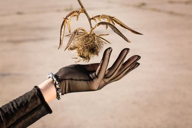 Ręka w czarnej rękawiczce zbiera suszone kwiaty
