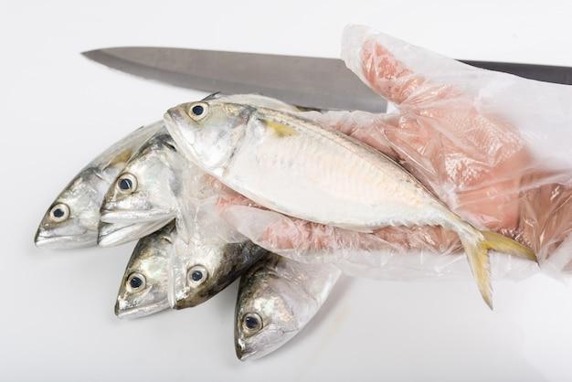 Ręka w rękawiczce trzyma świeże ryby makreli na białym tle