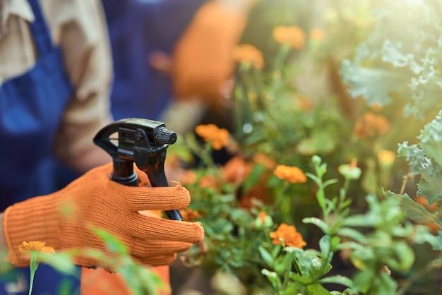 Ręka w rękawiczkach spryskuje wodą kwitnące kwiaty
