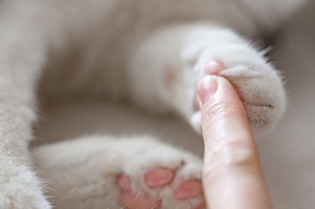 Ręka z łapa kota łapa kociaka i palec kobiety dla kontrastu zbliżenie