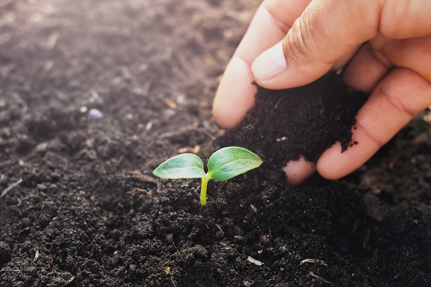 Ręka zasadza małego drzewa w ogródzie