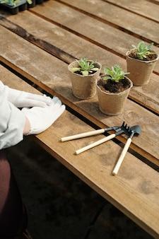 Rękawiczki ręce rolnika na drewnianym stole z sadzonkami w doniczkach