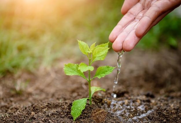 Ręki daje wodzie młody drzewo dla zasadzać. koncepcja dzień ziemi.