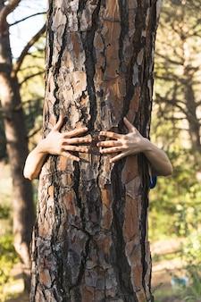 Ręki ściska drzewa w ładnych zielonych drewnach
