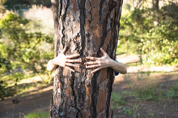 Ręki ściska drzewnego bagażnika w zielonym lesie