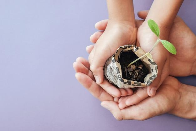 Ręki trzyma rozsadowe rośliny w gazecie puszkują, montessori edukacja