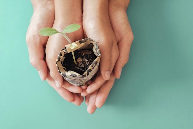 Ręki trzyma rozsadowe rośliny w gazetowym garnku