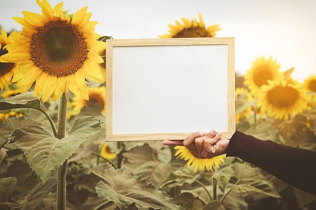 Ręki trzyma whiteboard na słonecznikowym tle