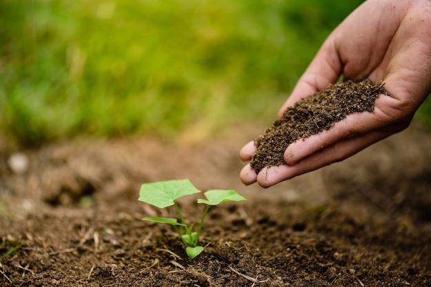 Ręki trzyma ziemię zasadzać młodego drzewa. koncepcja dzień ziemi.