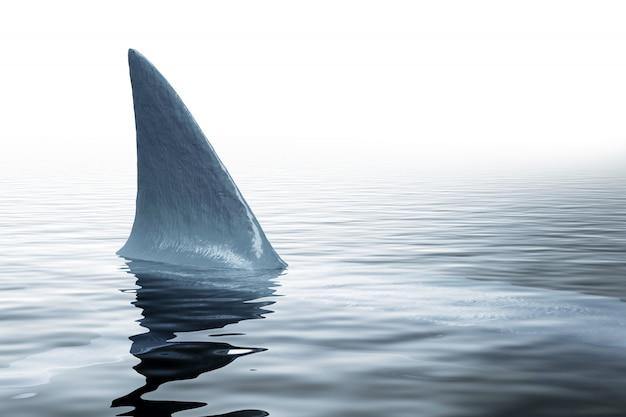 Rekin w morzu