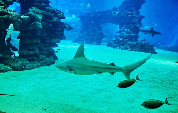 Rekiny w dużym akwarium w morzu czerwonym pływają wśród innych egzotycznych ryb