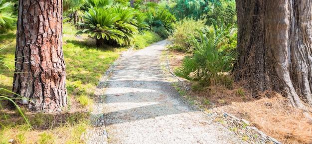 Relaksująca i spokojna ścieżka w ogrodzie botanicznym w sezonie letnim