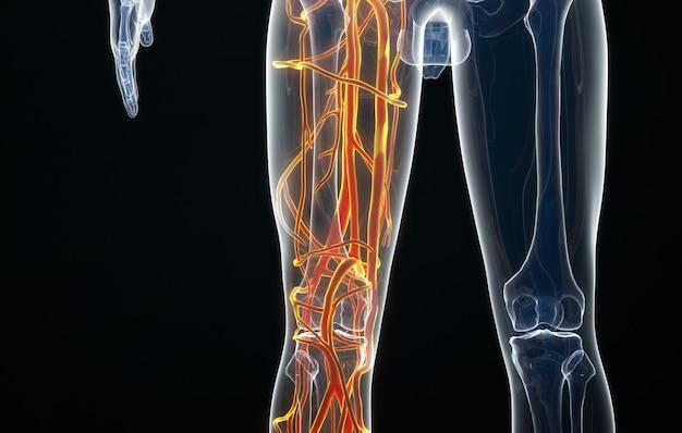 Rendering kinowy 4d rozkładu nerwów ludzkiej stopy