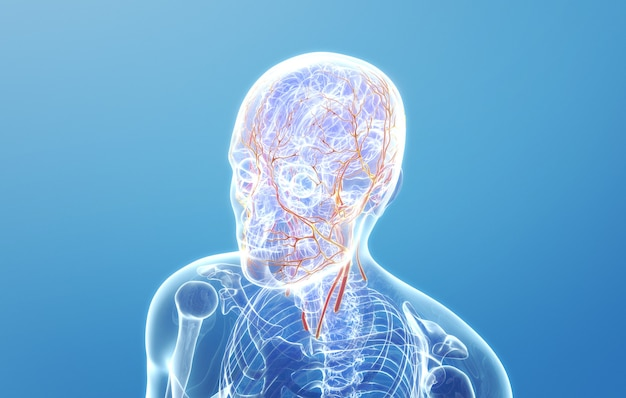 Rendering kinowy 4d rozmieszczenia naczyń krwionośnych na ludzkiej twarzy