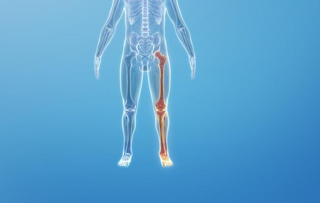 Rendering kinowy 4d struktury kostnej ludzkiej podudzia