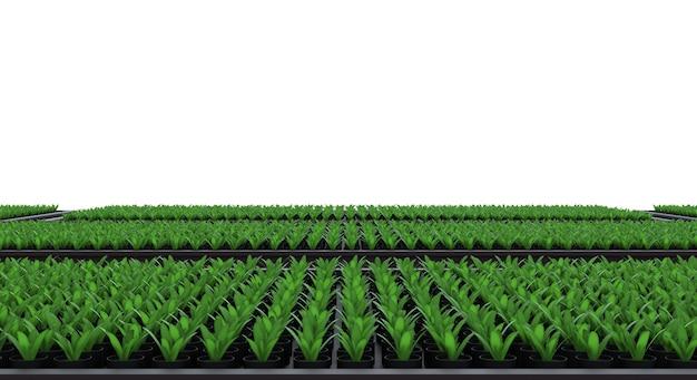 Renderowania 3d podniesiona roślina w łóżku ogrodowym na białym tle