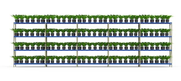 Renderowanie 3d podniesione rośliny na półkach na białym tle