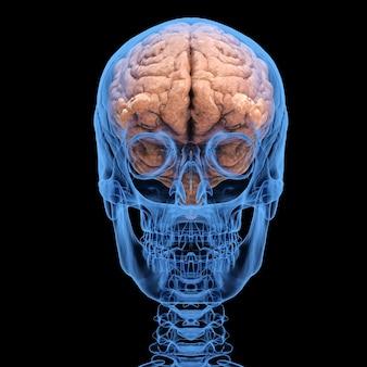 Renderowanie 3d rentgenowska ludzka czaszka z mózgiem na białym tle na czarnym tle