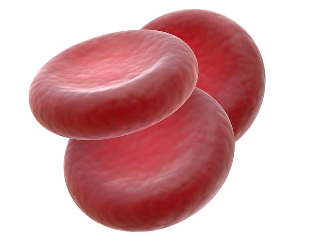 Renderowanie 3d trzech czerwonych krwinek, zwanych także erytrocytami, to komórki krążące we krwi i przenoszące tlen w całym organizmie