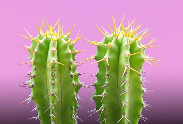 Rendy tropikalna roślina neon cactus na różowym