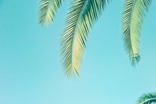 Retro stonowanych liści palmy. palma i niebo. naturalne tekstury tła z miejsca na kopię.
