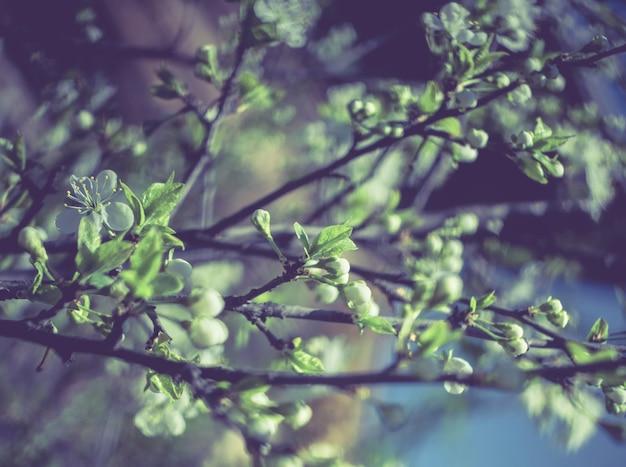Retro wiosna kwitnie makro