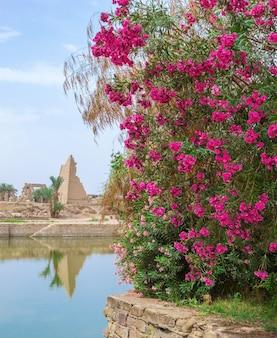 Rewolucjonistka kwitnie dalej świątynia w luxor, egipt