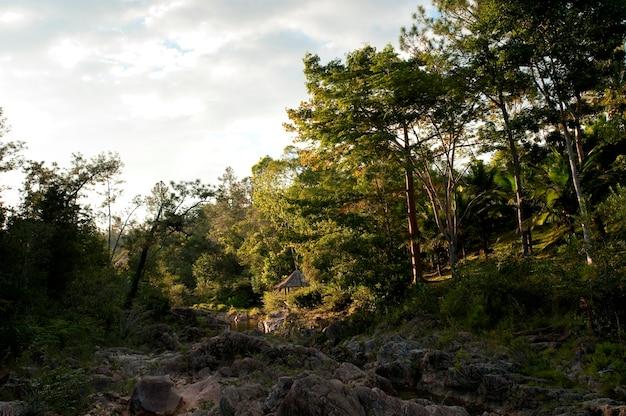 Rezerwat górski pine ridge, drzewa