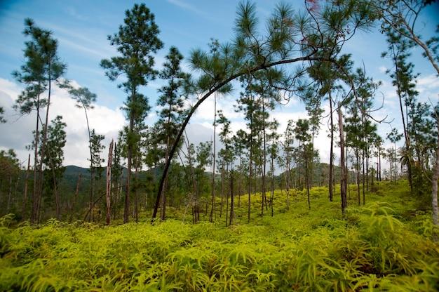 Rezerwat górski pine ridge, krajobraz