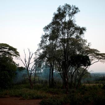 Rezydencje dworskie w kenii