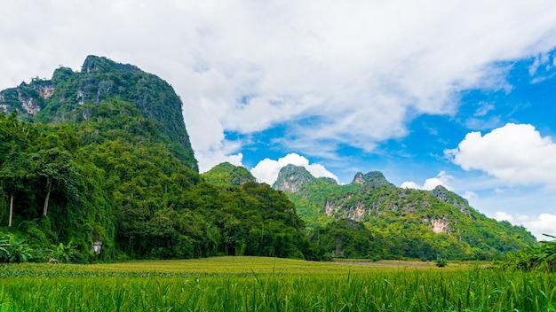 Rice pola wśród wapień gór z biel chmurą i niebieskim niebem
