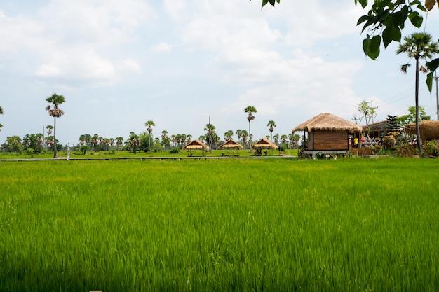 Rice pola zielonej trawy niebieskiego nieba chmury chmurny krajobraz