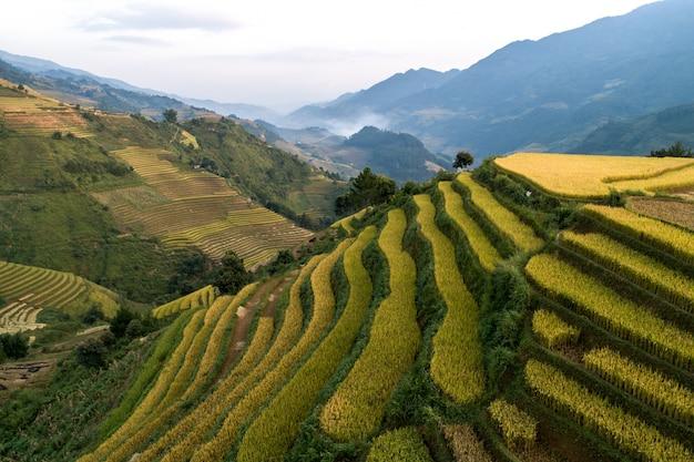 Rice zieleni pole przy mucangchai wietnam