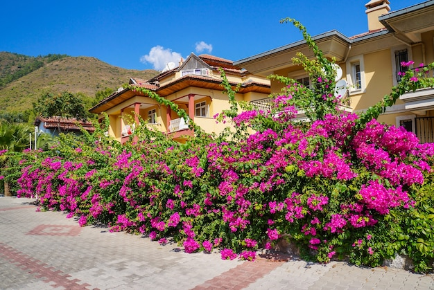 Riwiera turystyczna z kwitnącymi roślinami, słońcem i hotelami na tle zalesionych gór