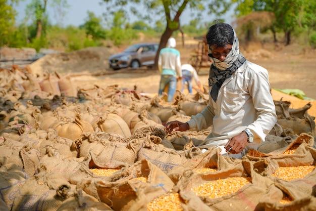 Robotnicy pakujący w worki jutowe kukurydzy