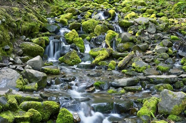Rocky i mossy creek